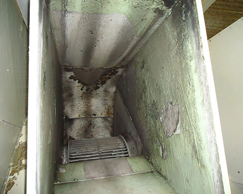 Corrosion-black-mould-growth-and-delaminating-existing-coating